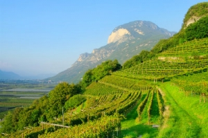 trentino-alto-adige-typical-mountain-vineyard