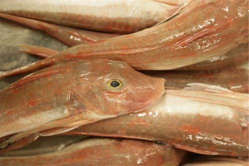 fish_2009
