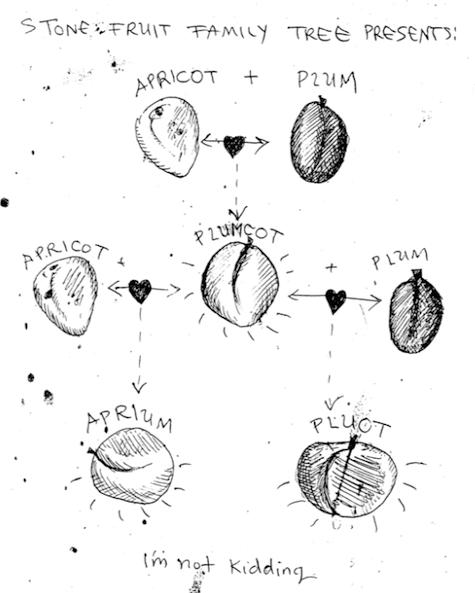Illustration by Jenny Raven