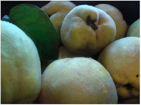 dusty-quince
