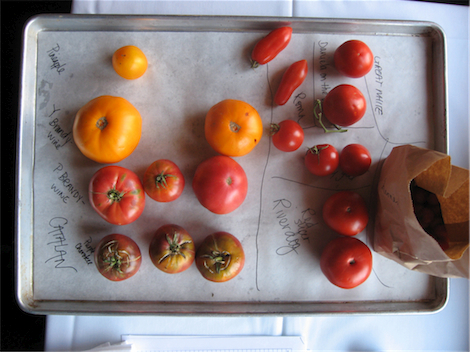 tomato tasting vertical