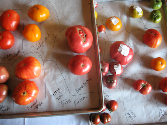 tomatoes 2009
