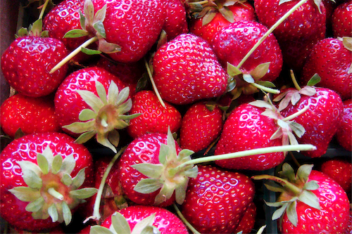 Lucero_strawberries_2011