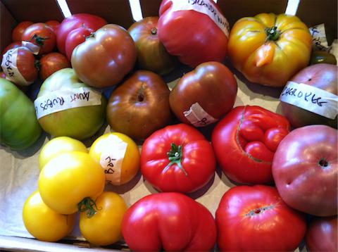 tomatoes2011_480