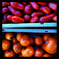 aug2012tomatoes2