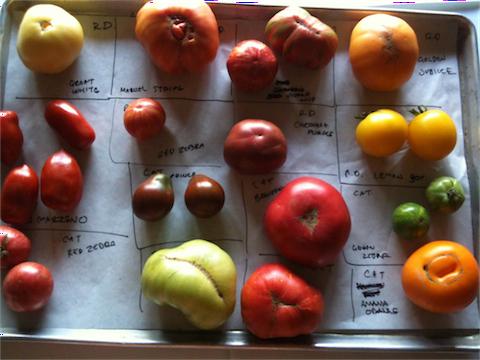 tomatoes2013_2