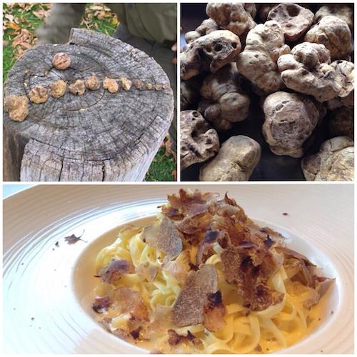 truffle_triptych_500