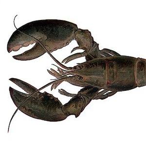 free-lobster-288
