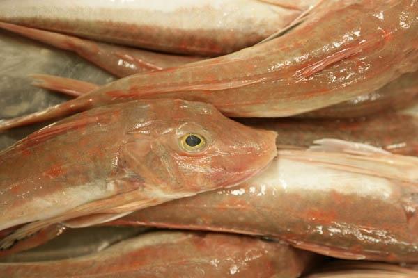 oceanic-fish