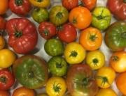 heirloom-tomatoes-320