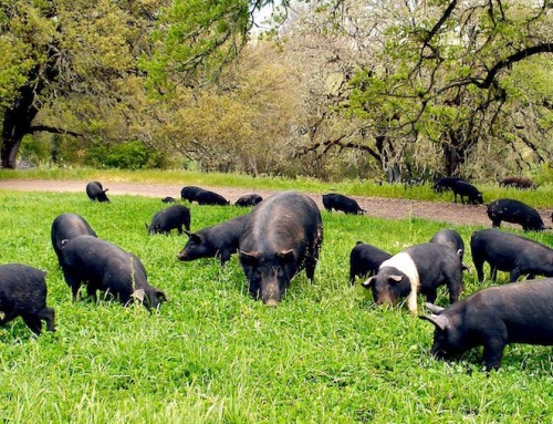 Whole Hog Dinner Menu March 1-4