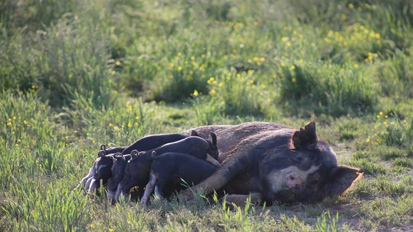 Announcing Whole Hog Dinners, March 14-17