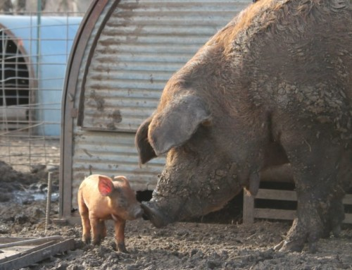 Whole Hog Dinner, dates set: March 13-17