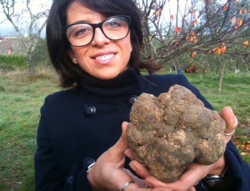 Tales from the Truffle Trade – Chapter 4