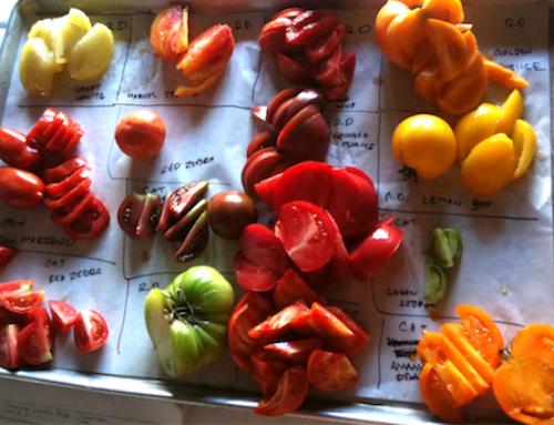 Tomato Dinners 2019, September 10-14